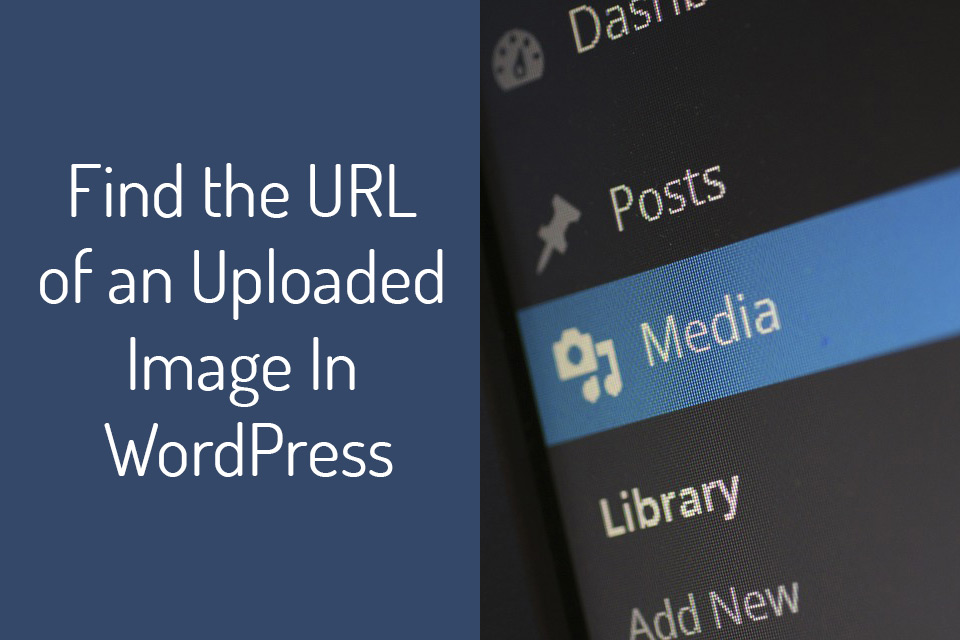 How to find an image URL in WordPress